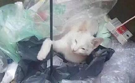 大一新生带弓箭射杀流浪猫 被学校退学