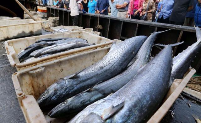 黄海开捕 渔民喜获丰收|组图