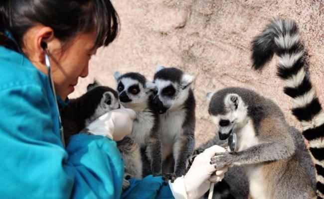 山东青岛:动物体检过寒冬