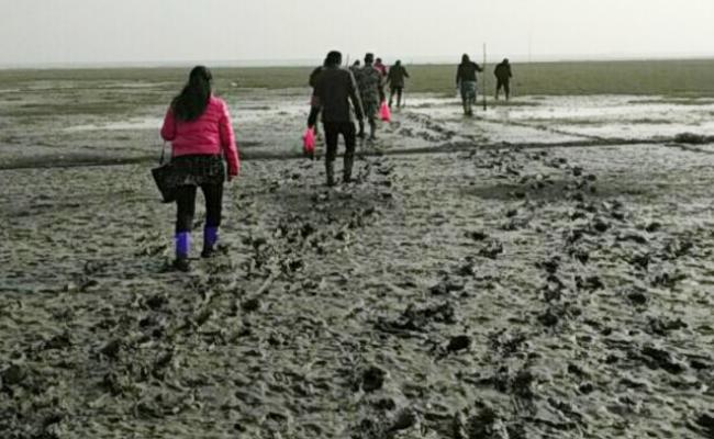 为鸟儿活着过年,他们春节离家踏进泥滩