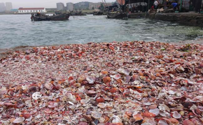成吨贝壳被海浪席卷上岸
