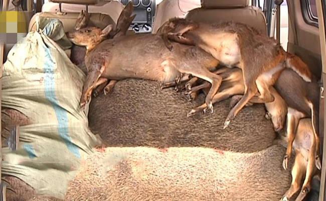 警方拦截一车:里面全是野生动物
