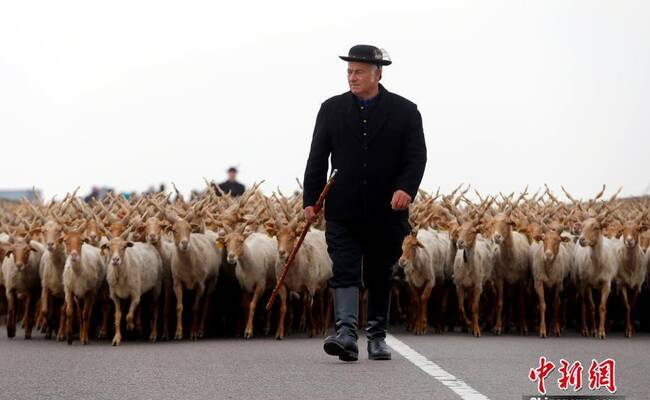 匈牙利放牧季