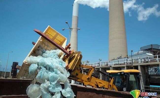 以色列发电厂遭大量水母入侵