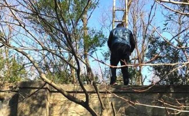 上海野生动物园现翻墙逃票团伙 已持续2年