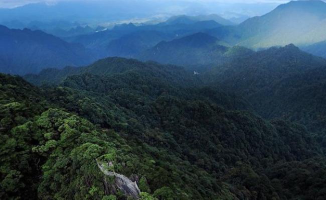 这是广东唯一的原始森林保留地