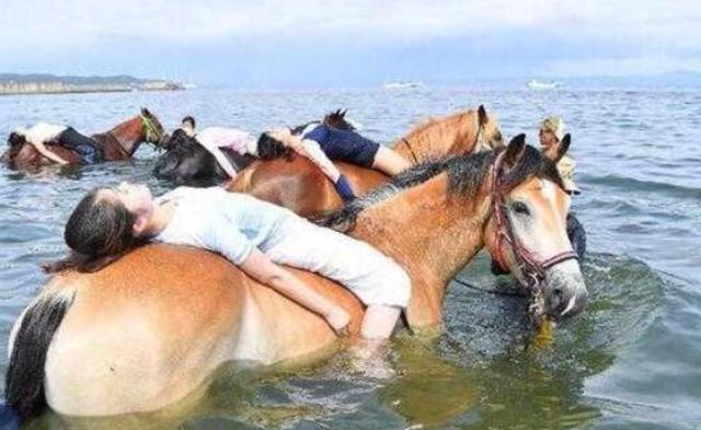 日本现奇观 人骑马在海中散步|组图