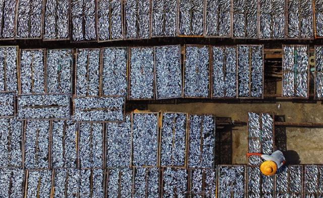 深圳晒鱼场的生活丨组图