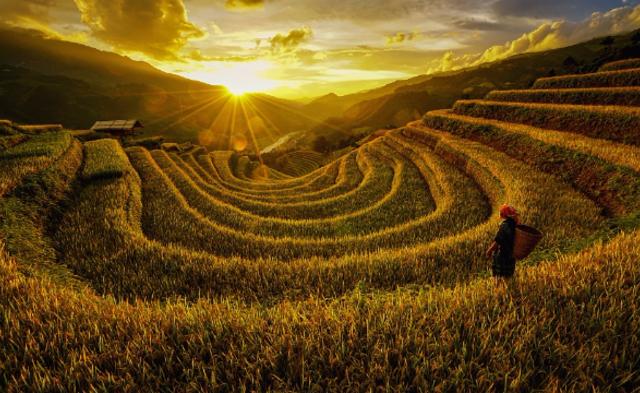 越南梯田|组图