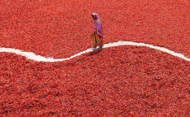 3000吨辣椒铺满地