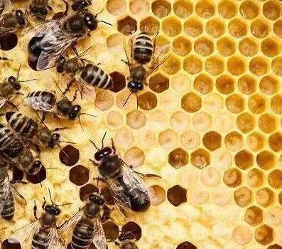 英国养蜂博士将蜜蜂引进小学校园:孩子能从蜜蜂学到的事太多了!