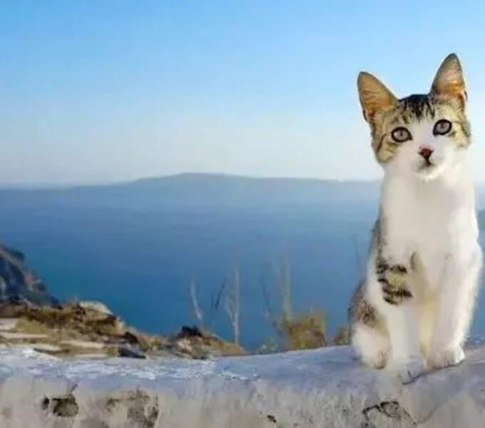 为拍猫片走遍全球,作品登上《国家地理》,豆瓣给分9.4