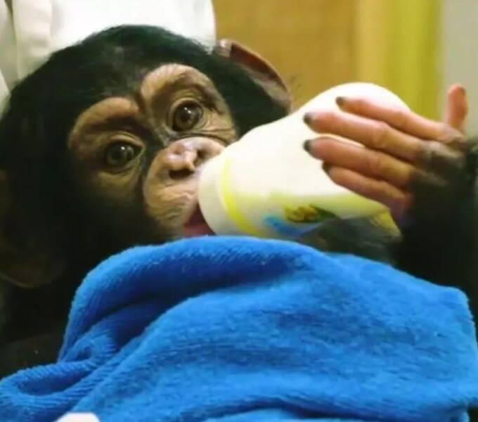 国产动物纪录片《我的朋友不是人》为何刷爆B站