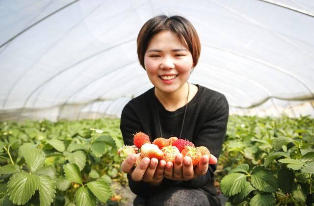 """90后安徽女孩回乡创业成""""草莓姑娘"""""""