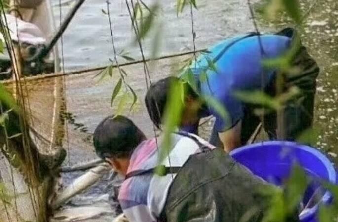 为保护生态平衡!四川高校捞2000斤大鱼请全校师生免费吃