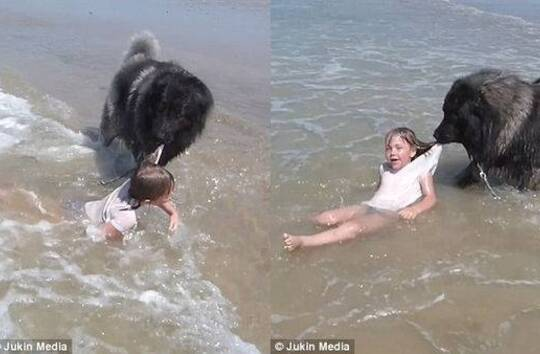 """有爱!狗狗从海浪中""""救""""出小女孩"""