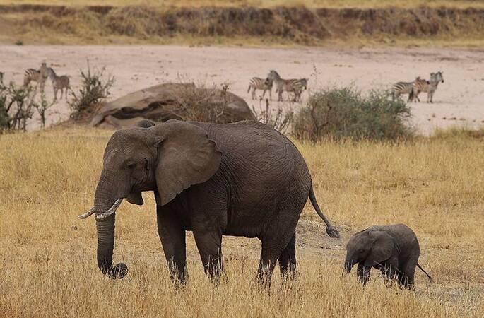 有母亲的地方才是家:摄影师镜头记录动物母子动人瞬间