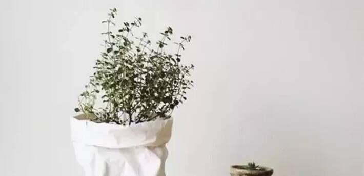 用纸袋装植物,宅在家就能拍出时尚大片!