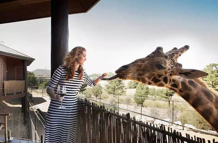 0/0 这里是世界最大私家动物园之一,也是世界上最兽性的酒店,jamala