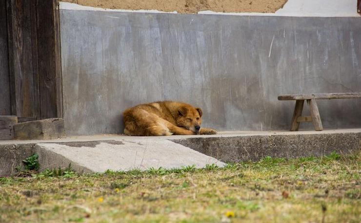 秦岭天府寨|访遍村中十户人家 不见人影只看到一条狗 - 子泳 - 子泳WZ的博客