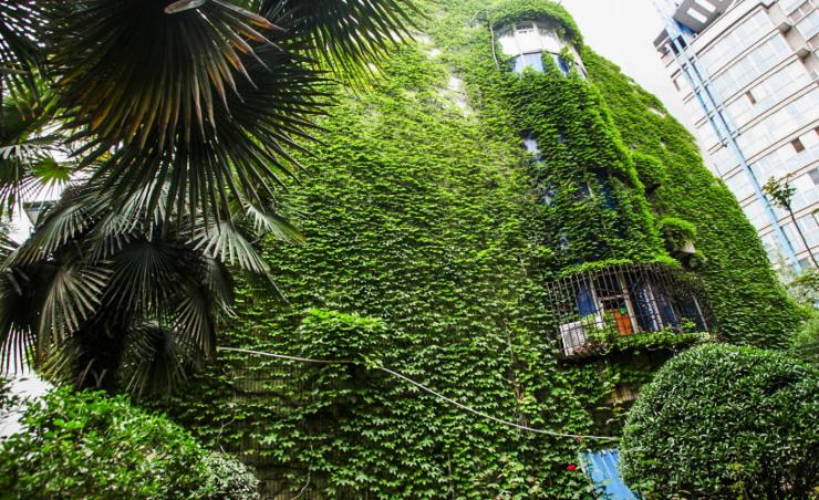 西安市的一些高楼的外墙或者楼顶布满的绿色植物,不仅成为了一道风景