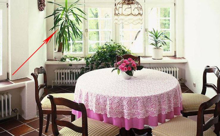 家里三个地方一定要放植物 再穷也会变富裕