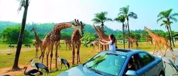 番禹农民竟开了一家自己的动物园