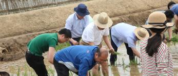 中国外交官赴朝鲜农场支农画面