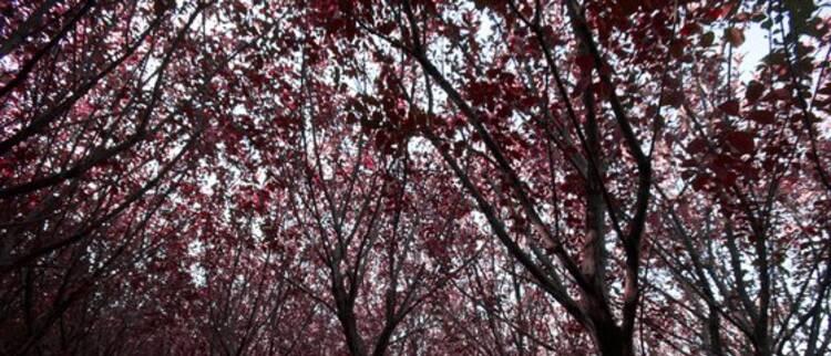 走近深秋的济州 最适合拍照的四处旅行名胜