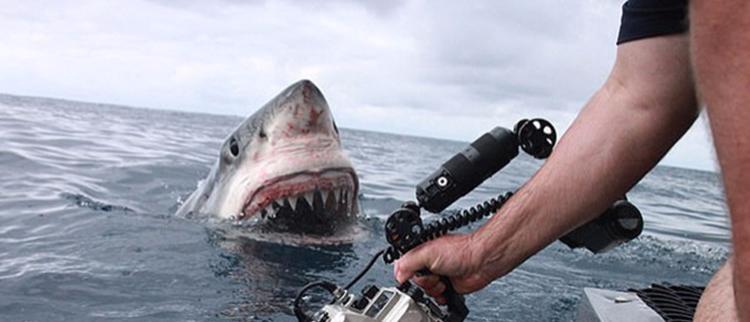 近距离拍摄大白鲨