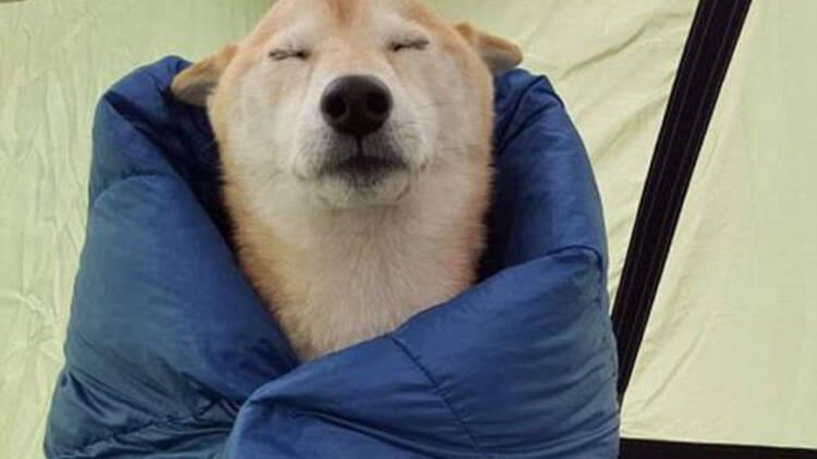 汪累了也是要打瞌睡的……