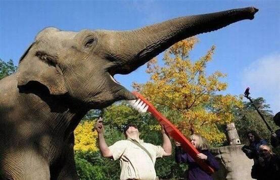 刷牙真的超爽的!