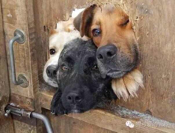 人狗电影哪里有_谁让人家的狗生放荡不羁爱自由呢!