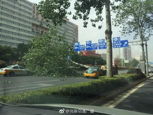 北京大风砸中人图片