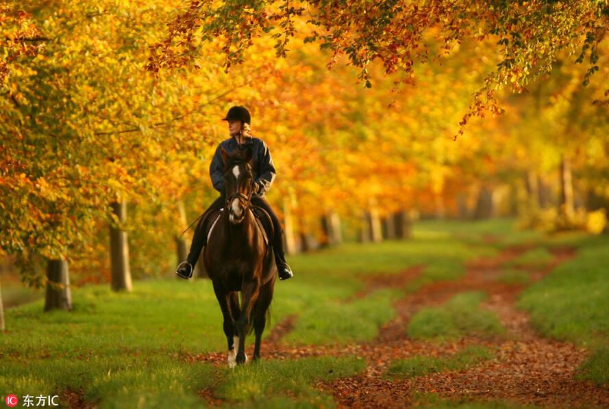 英国秋天的景致非常美丽,别致。