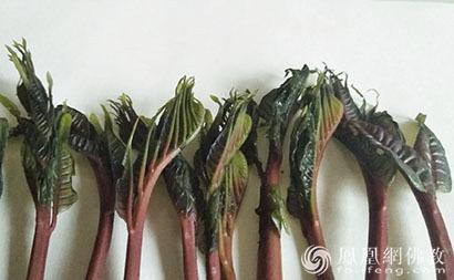 素食健康:春日尝鲜 多吃7种春芽有益健康