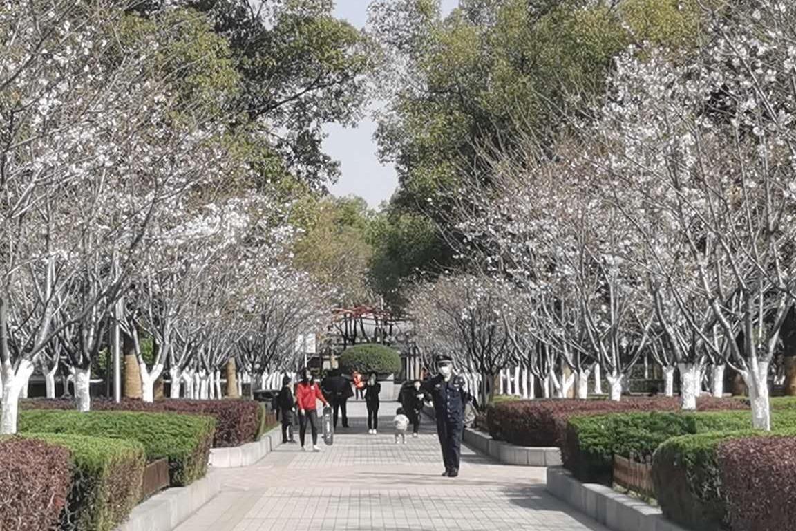 合肥市瑶海区居民在家门口就能欣赏到樱花美景