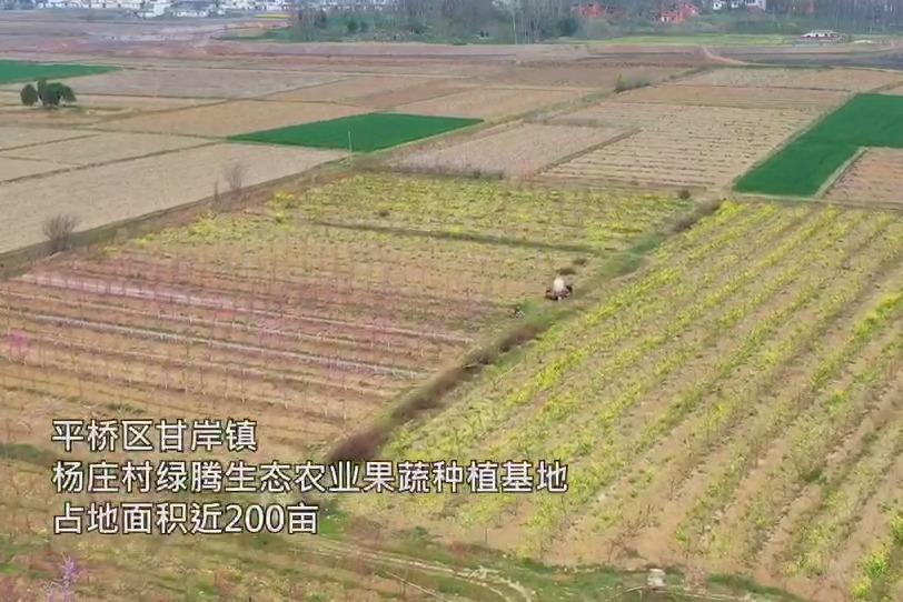 平桥区甘岸镇绿腾生态农业果蔬种植基地