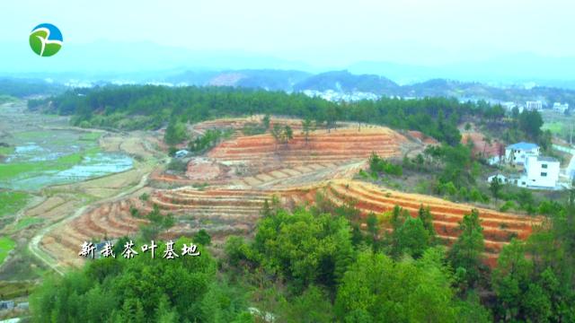 """九江修水县:""""造血式""""产业扶贫助农增收"""