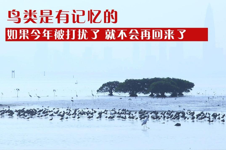 深圳湾即将开发旅游航线,旅游开发VS生态保护,到底哪个更重要?