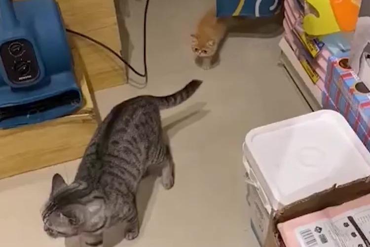 撩妹技能,小腿一伸撩倒一片!
