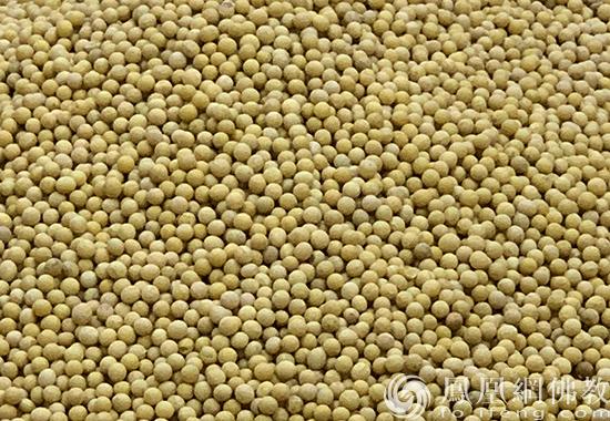 黄豆(图片来源:凤凰网佛教 摄影:李保华)