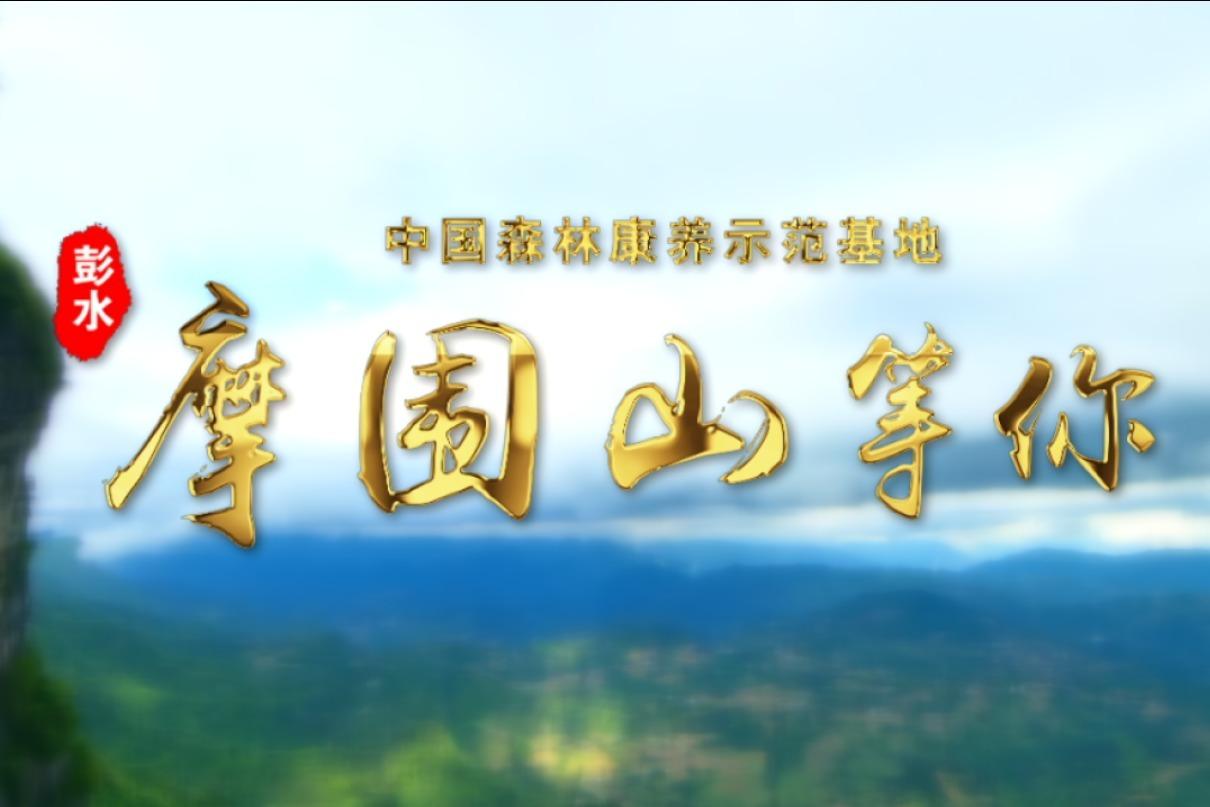 视频丨中国森林康养示范基地  彭水摩围山等你