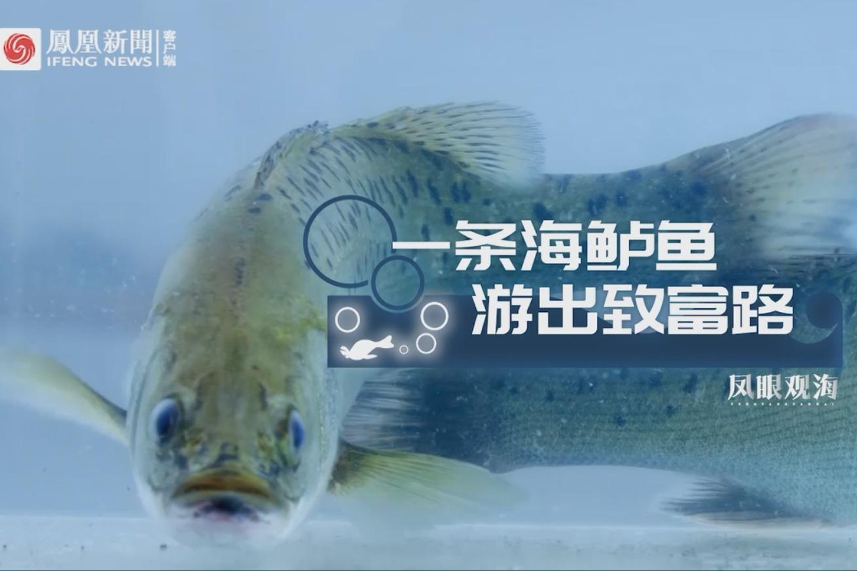 珠海斗门:一条海鲈鱼 游出致富路