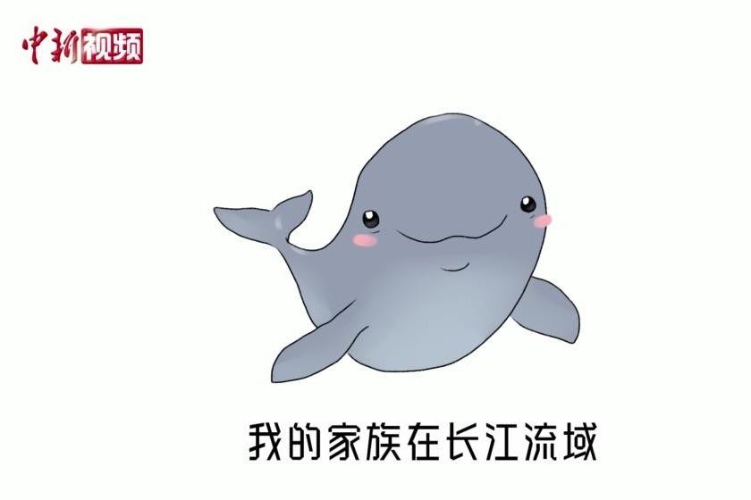 我叫江豚,这是我的故事