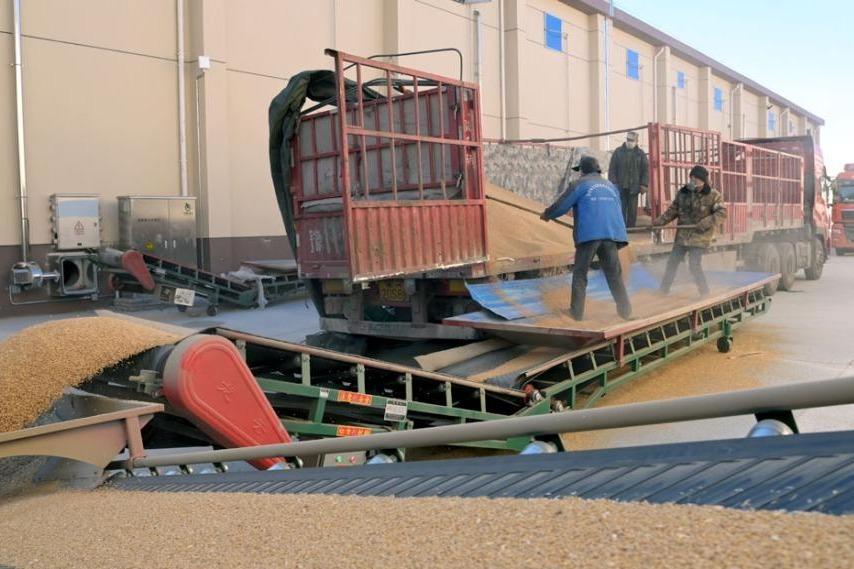 仓有粮心不慌 兰州新区万吨储备粮首批运抵入库