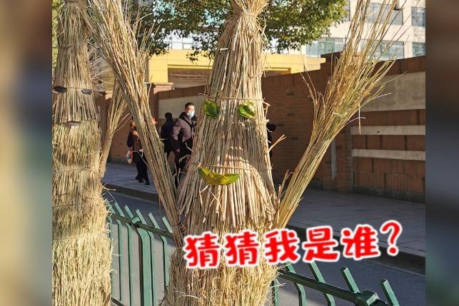 快看!杭州稻草人排队了