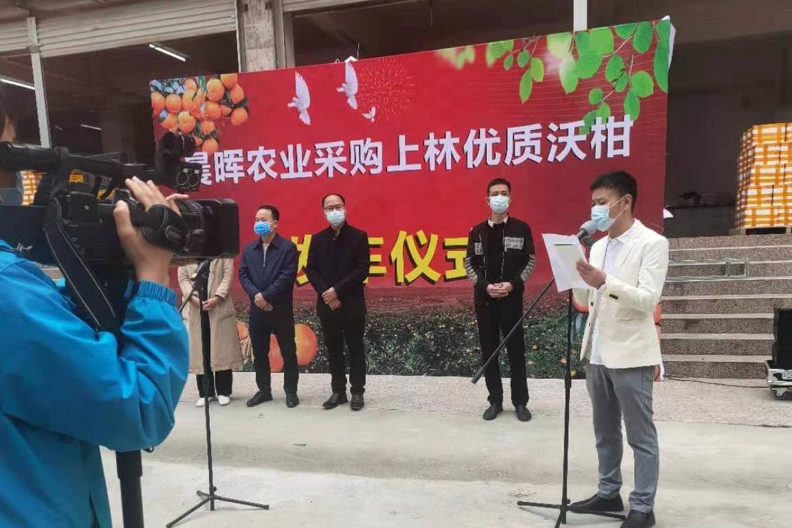 上林寨柳电子商务中心 上林沃柑日发千单 上林沃柑发往全国各地