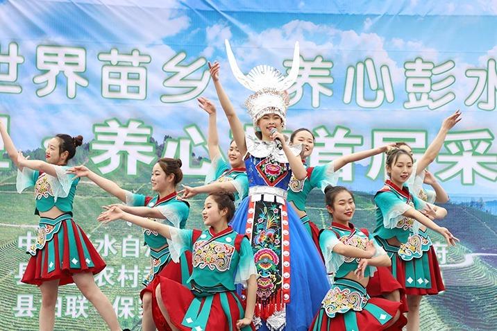 视频丨茶香溢苗乡 彭水举行首届采茶节
