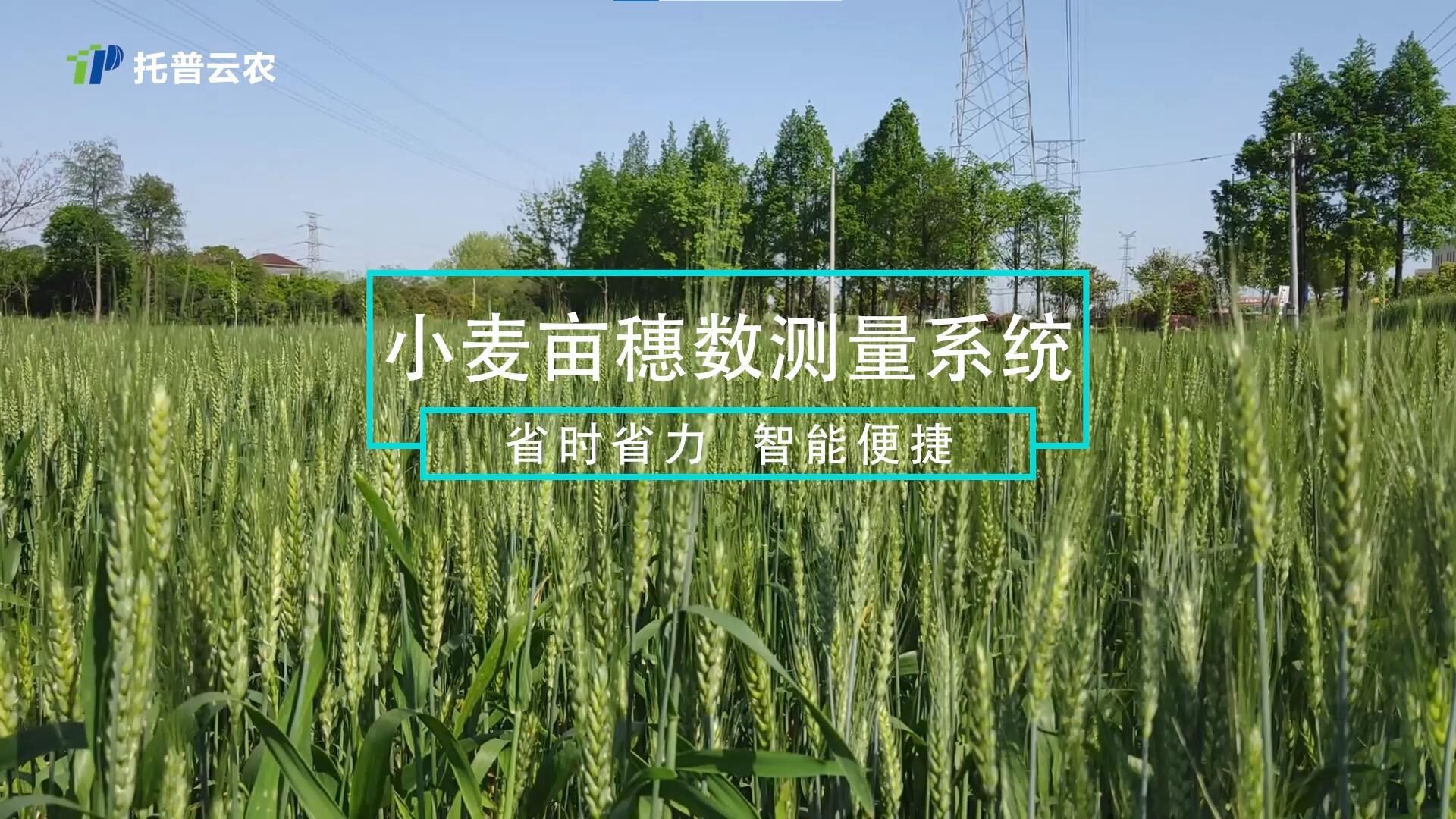 托普云农|拍照就能识别小麦亩穗数,人工智能让育种专家更轻松!